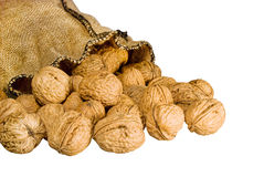 Many walnuts falling out burlap sack isolated Stock Image