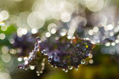 Many water drops in leaf Royalty Free Stock Images