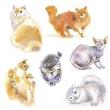 Many watercolor cats. Many different sweet watercolor cats hand made Royalty Free Stock Photo