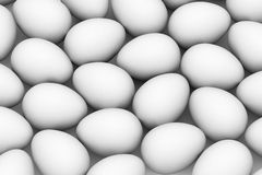 Many white eggs Stock Photo