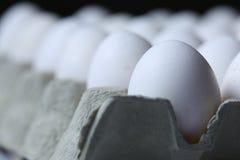 Many white eggs Stock Photos