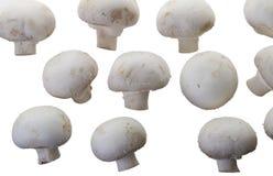 Many white mushroom Stock Photos