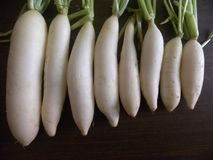 Many White Radish kept on a wooden table. Close up of many White Radish kept on a wooden table Royalty Free Stock Images