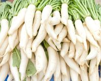 Many white radishes Royalty Free Stock Photography