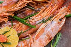 Many whole langoustine with head and claws slice of lemon. With dill branches Royalty Free Stock Photography