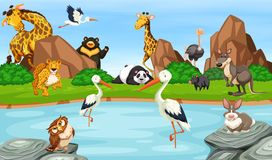 Many wild animals by the pond. Illustration Royalty Free Stock Photography