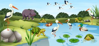 Many wild animals in the pond. Illustration Royalty Free Stock Photo