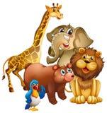 Many wild animals in the zoo Royalty Free Stock Photos