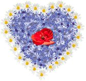 Many wild flower. Shape of heart on  the white background. Cornflower, white camomile, red poppy. Flower heart Royalty Free Stock Images