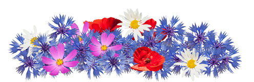 Many wild flowers on the white background Stock Photo