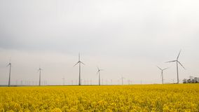 Many windmills rotating during windy spring cloudy day. On yellow field with oil rape seed stock footage