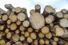 Many wood logs stock photos