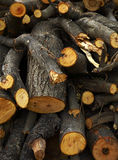 Many woodpile Royalty Free Stock Photo