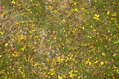 Many yellow flower on grass Stock Images