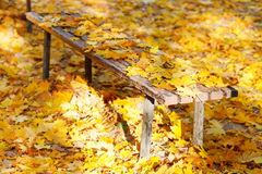 Many yellow maple leaves on garden bench Royalty Free Stock Photo