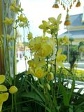 Many yellow orchids are a bouquet of flowers. royalty free stock images