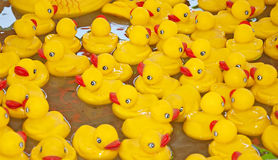 Many Yellow Rubber Ducks Floating in Water Stock Images