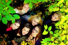 Many young girls in the autumn park Stock Photography