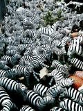 Many zebras plastic Stock Photo