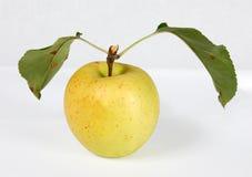 Manzana amarilla en un fondo blanco Foto de archivo libre de regalías