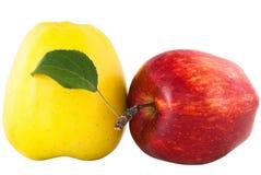 Manzana amarilla y roja con la hoja verde Imagen de archivo libre de regalías