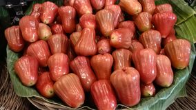 manzana color de rosa de rubíes en Tailandia fotografía de archivo