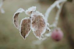 Manzana congelada Foto de archivo libre de regalías