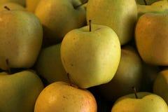 Manzana de Goldrush Foto de archivo