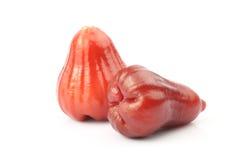 Manzana de la cera Foto de archivo libre de regalías