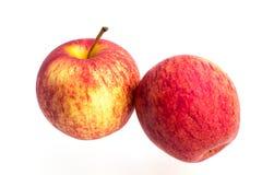 Manzana de la gala en un fondo blanco Imagen de archivo