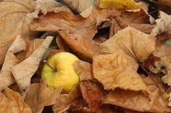 Manzana de la ganancia inesperada Fotos de archivo