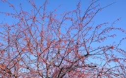 Manzana de la mierda Foto de archivo libre de regalías