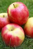 Manzana de la señora rosada fotografía de archivo