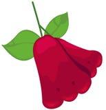 Manzana de Rose Imágenes de archivo libres de regalías