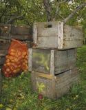 Manzana del cajón de Woodern Imagen de archivo