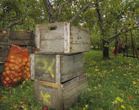 Manzana del cajón de Woodern foto de archivo libre de regalías