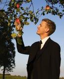 Manzana del muestreo del hombre joven Fotografía de archivo