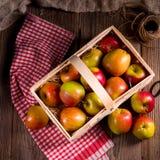 Manzana del otoño Foto de archivo libre de regalías