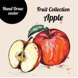 Manzana dibujada mano del bosquejo de la acuarela Ejemplo del vector de la comida del eco del vintage Imagen de archivo libre de regalías