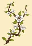 Manzana floreciente Manzano de la rama con las flores blancas en un fondo amarillo Imagenes de archivo