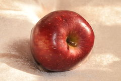 Manzana madura roja Fotos de archivo libres de regalías