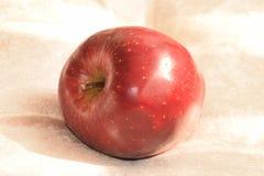 Manzana madura roja Imagen de archivo libre de regalías