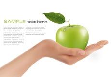 Manzana madura verde en una mano. stock de ilustración
