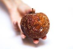 Manzana mohosa en su mano Fotos de archivo libres de regalías