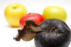 Manzana putrefacta en la fila de manzanas frescas Fotos de archivo libres de regalías