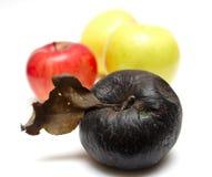 Manzana putrefacta en la fila de manzanas frescas Imágenes de archivo libres de regalías