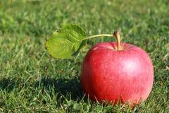 Manzana roja foto de archivo
