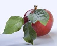 Manzana roja con la hoja Fotografía de archivo