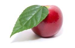 Manzana roja con la hoja Imagenes de archivo