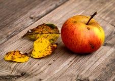 Manzana roja con las hojas del amarillo del árbol imagenes de archivo